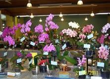 Orchid Show Brisbane