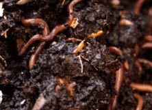Home Worm Farming, Worm Farm