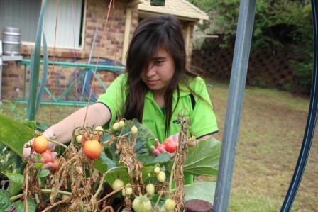 Harvesting Seeds for My Next Growing Season