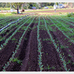 organic fertilizer for agriculture