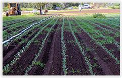 farming-vegetables