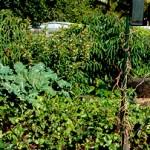 Home Garden Fertiliser